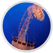 Jelly And Fishy Round Beach Towel