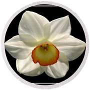 Round Beach Towel featuring the photograph Jonquil 1 by Rose Santuci-Sofranko