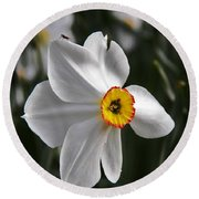 Round Beach Towel featuring the photograph Jonquil by Judy Via-Wolff