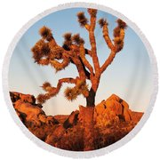Round Beach Towel featuring the photograph Joshua Tree At Sunset by Mae Wertz