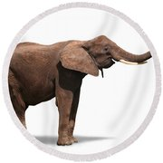 Joyful Elephant Isolated On White Round Beach Towel