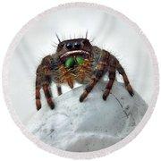 Jumper Spider 2 Round Beach Towel