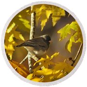 Junco In Morning Light Round Beach Towel by Nava Thompson