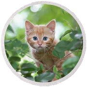 Jungle Kitty Round Beach Towel by Debbie Green