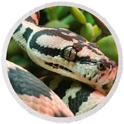 Jungle Python Round Beach Towel