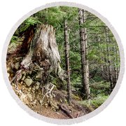 Just Hanging On Old Growth Forest Stump Round Beach Towel by Roxy Hurtubise