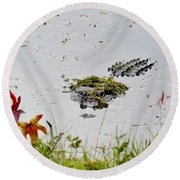 Round Beach Towel featuring the photograph Just Hanging Out by Cynthia Guinn
