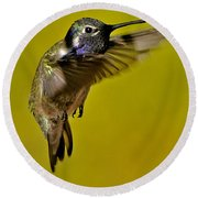 Round Beach Towel featuring the photograph Juvenile Male Allen Hummingbird In Flight Ready To Land by Jay Milo