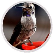 Round Beach Towel featuring the photograph Juvenile Male Anna On Perch by Jay Milo