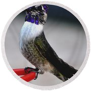 Round Beach Towel featuring the photograph Juvenile Male Costa On Perch Posing by Jay Milo