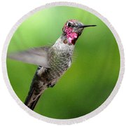 Round Beach Towel featuring the photograph Juvenile Male Anna's In Flight by Jay Milo