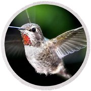 Juvenile Red Thoated Hummingbird Round Beach Towel by Jay Milo