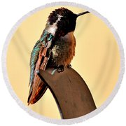Round Beach Towel featuring the photograph Juvenile Rufus Hummingbird Sitting It Out by Jay Milo