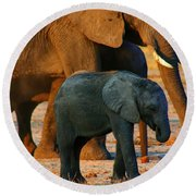 Round Beach Towel featuring the photograph Kalahari Elephants by Amanda Stadther