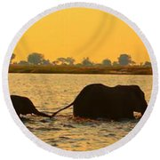 Round Beach Towel featuring the photograph Kalahari Elephants Crossing Chobe River by Amanda Stadther