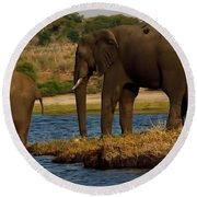 Round Beach Towel featuring the photograph Kalahari Elephants Preparing To Cross Chobe River by Amanda Stadther
