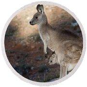 Kangaroo And Joey Round Beach Towel