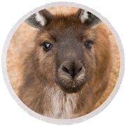 Kangaroo Island Kangaroo Round Beach Towel by Marie Read
