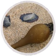 Kelp Float And Velella Round Beach Towel