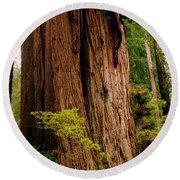 Kevin And The Big Tree - Redwood National Forest Round Beach Towel by Michelle Calkins