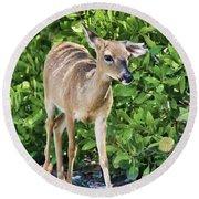 Key Deer Cuteness Round Beach Towel