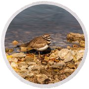Kildeer On The Rocks Round Beach Towel by Robert Frederick