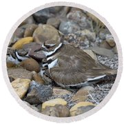 Killdeer And Young Round Beach Towel