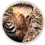 Killdeer On Its Nest Round Beach Towel by Chris Flees