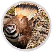 Killdeer On Its Nest Round Beach Towel