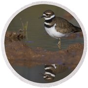 Round Beach Towel featuring the photograph Killdeer Reflection by Bryan Keil