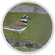 Killdeer Walking Round Beach Towel by Sharon Talson