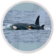 Round Beach Towel featuring the photograph Killer Whale Mother And New Born Calf Orcas In Monterey Bay 2013 by California Views Mr Pat Hathaway Archives