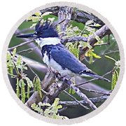 Round Beach Towel featuring the photograph King Of The Tree by Elizabeth Winter