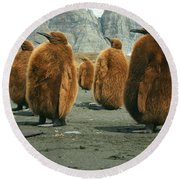 King Penguin Chicks Round Beach Towel