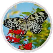 Round Beach Towel featuring the photograph Kite Butterfly by Peggy Franz