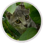 Kitten In The Bushes Round Beach Towel