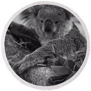 Koala Round Beach Towel by Chris Flees