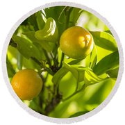 Kumquats Round Beach Towel