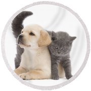 Labrador Puppy And Chartreux Kitten Round Beach Towel