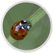 Lady Bug Close Up Round Beach Towel
