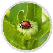 Lady Bug In The Garden Round Beach Towel