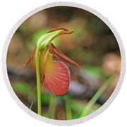 Lady Slippers At Moore State Park 4 Round Beach Towel
