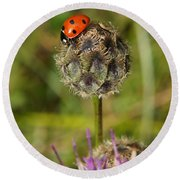 Ladybird Round Beach Towel by Ron Harpham