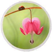 Ladybug And Bleeding Heart Flower Round Beach Towel by Peggy Collins