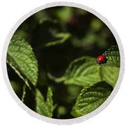 Round Beach Towel featuring the photograph Ladybug by Bradley R Youngberg