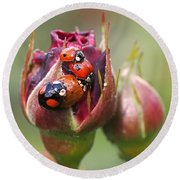 Ladybug Foursome Round Beach Towel