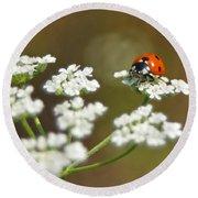 Ladybug In White Round Beach Towel