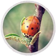 Round Beach Towel featuring the photograph Ladybug  by Kerri Farley