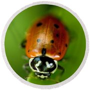 Ladybug On Leaf Round Beach Towel