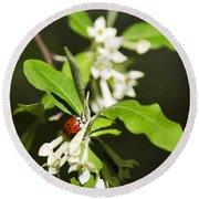 Ladybug And Flowers Round Beach Towel